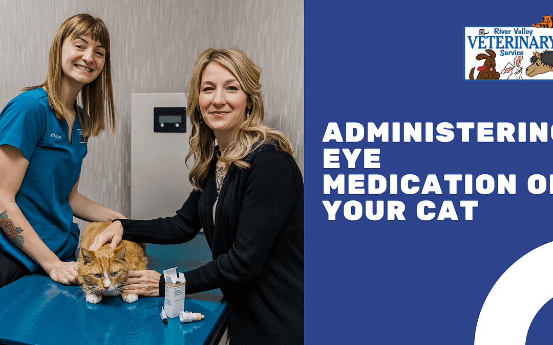 Administering Eye Medication on Your Cat