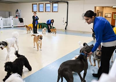 Doggy Daycare at RVGB