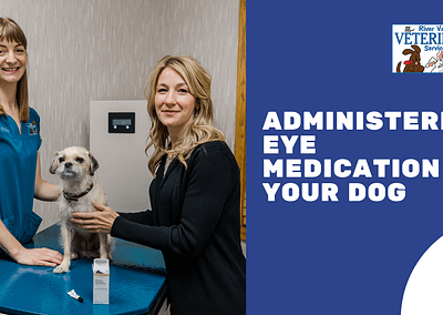 Administering Eye Medication on Your Dog