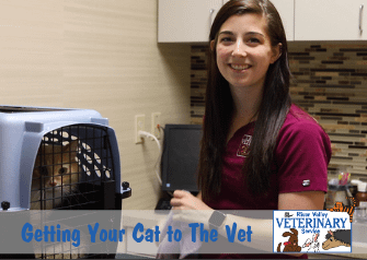 How to Safely Get Your Cat to the Vet