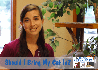 Should I Bring My Cat In?
