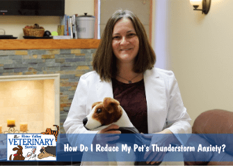 How Do I Reduce My Pet's Thunderstorm Anxiety?