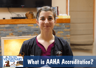 What is AAHA Accreditation?