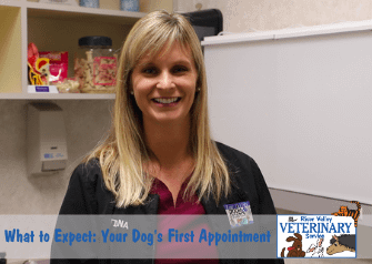 What to Expect: Your Dog's First Appointment