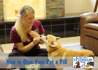 How to Give Your Pet a Pill