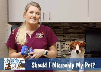 Should I Microchip My Pet?