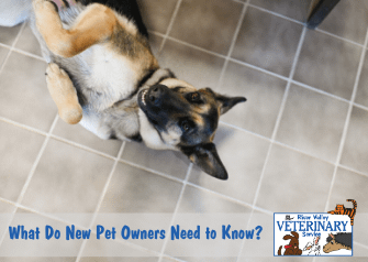 What Do New Pet Owners Need to Know?