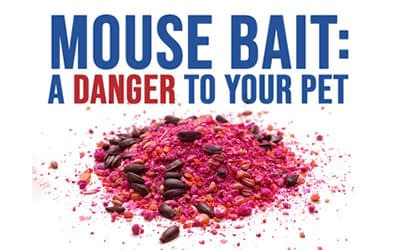 About That Mouse Bait….