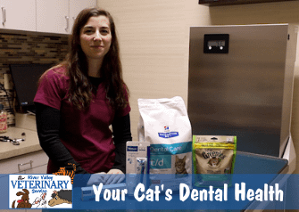 Your Cat's Dental Health