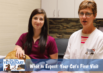 What to Expect: Your Cat's First Visit