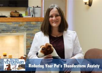 How Do I Reduce My Pet's Thunderstorm Anxiety?