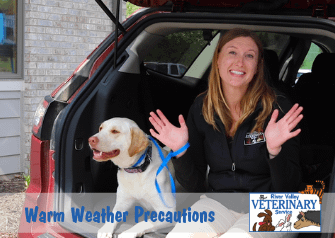 Warm Weather Precautions to Take With Your Pet
