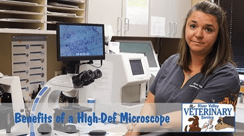 Benefits of a High-Def Microscope