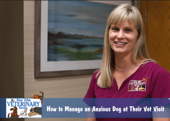How to Manage an Anxious Dog at Their Vet Visit