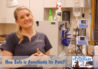 How Safe is Anesthesia for Pets?