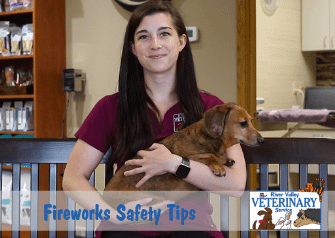How to Keep Your Pet Safe and Happy During Fireworks Season