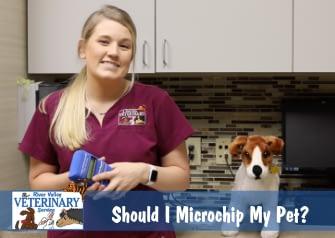 Should I Microchip My Pet?
