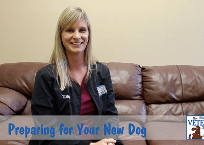 Preparing for Your New Dog